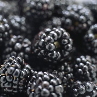 high_blackberries-sml